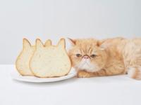 高級食パン専門店「ねこねこ食パン」