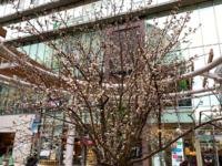 Hoop Sakura Jack 202